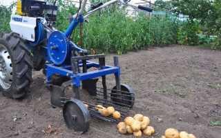 Посадка картофеля мотоблоком Нева. Окучиватель, картофелекопалка и сажалка – отзывы владельцев